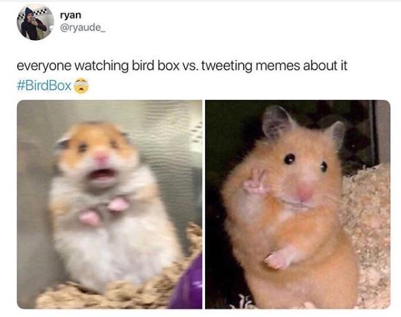 bird-box-meme-3-1545927998112.jpg