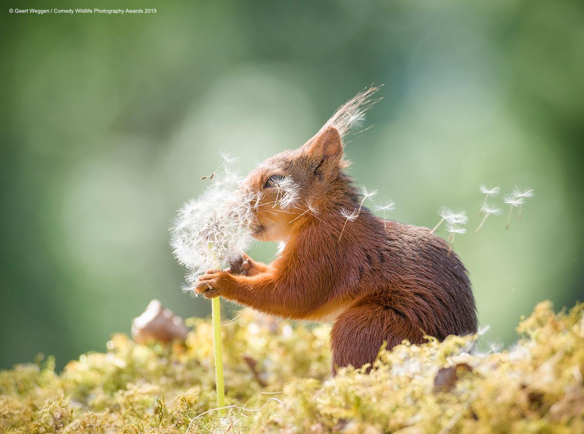 8-geert-weggen_squirrel-wishes_00003677-1568311227863.jpg
