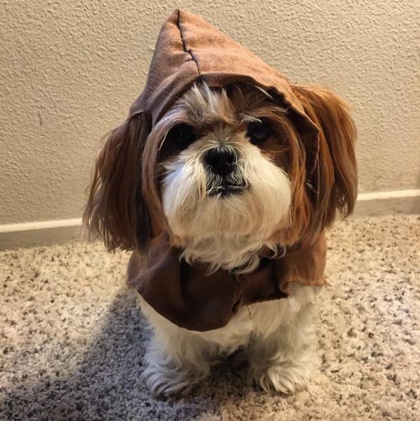 4-dog-costumes-1568997764271.jpg