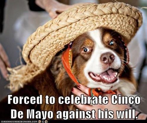 happy-cinco-de-mayo-meme-3-1556895251573.png