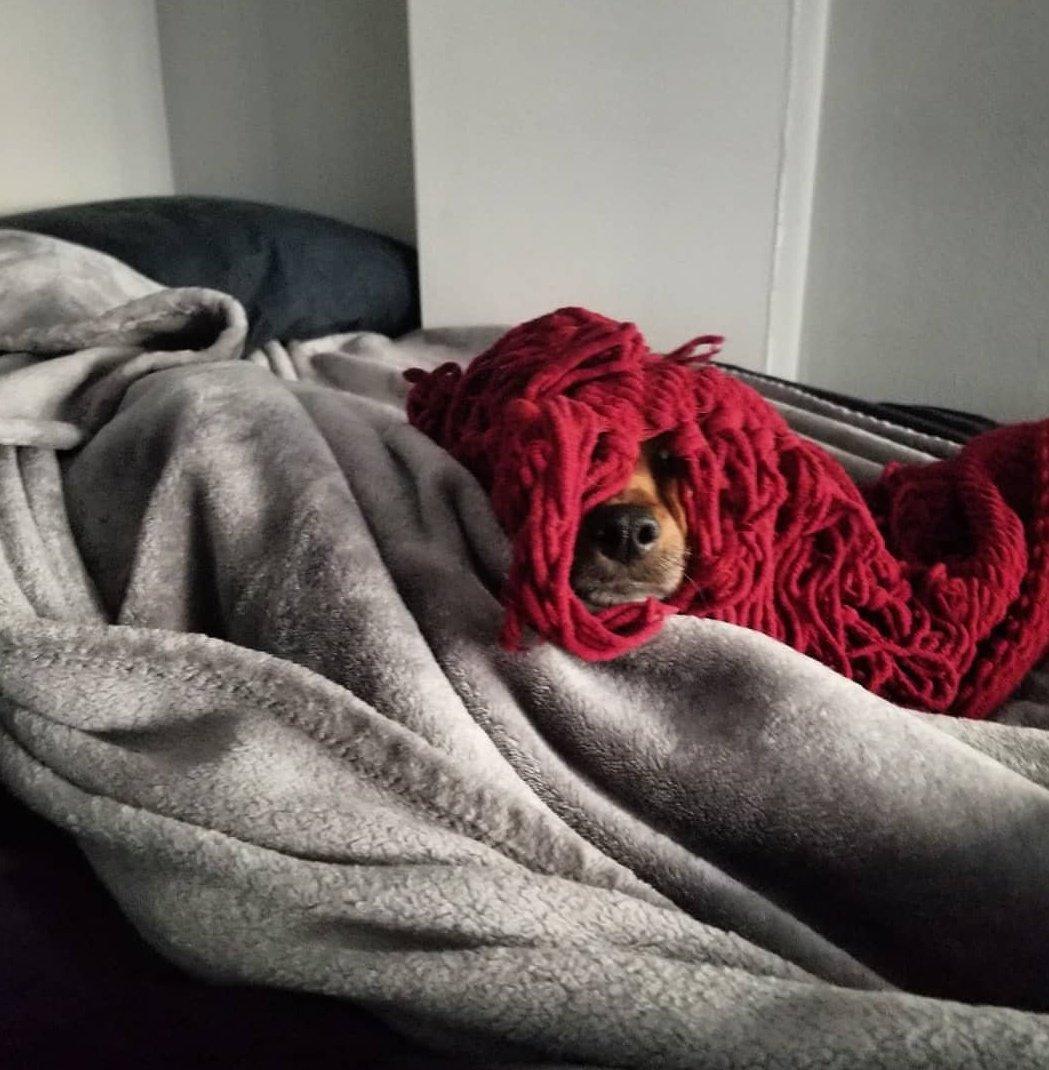 dog-hiding-1545667005078.jpg