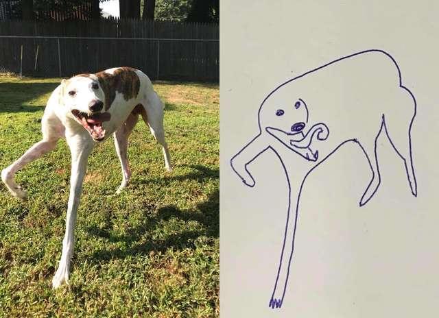 flat-dog-doodles-1567790544978.jpg