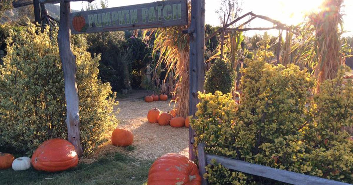 best-pumpkin-patch-near-me-san-diego-1539191317558-1539191320781.jpg