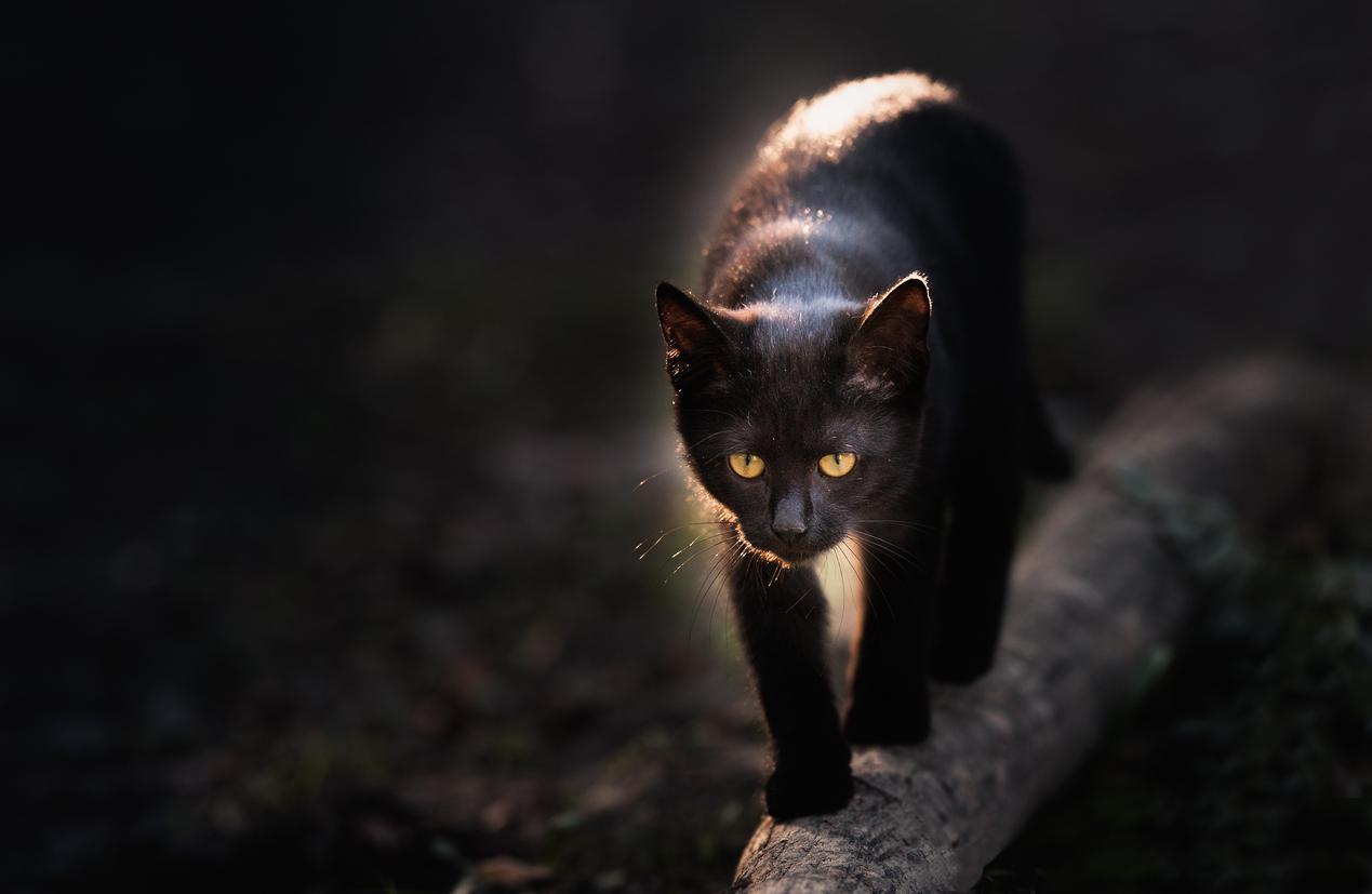 blackcat-1537900972474-1537900974459.jpg