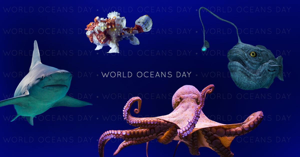 worldoceansday-1496943878262.jpg