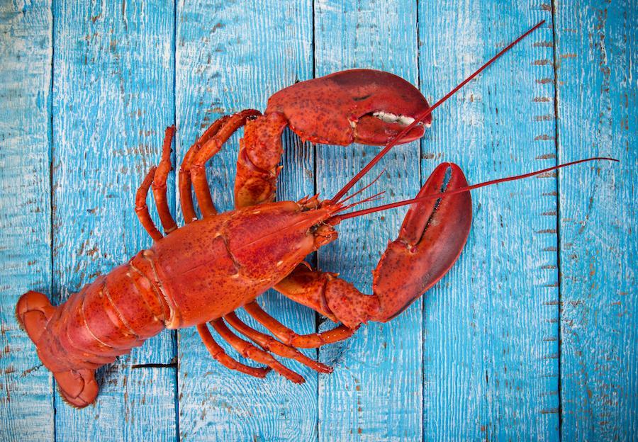 lobster-1537460692193-1537460694241.jpg