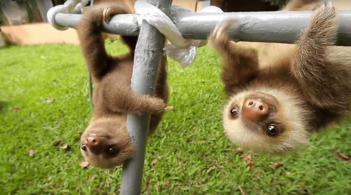 sloth()