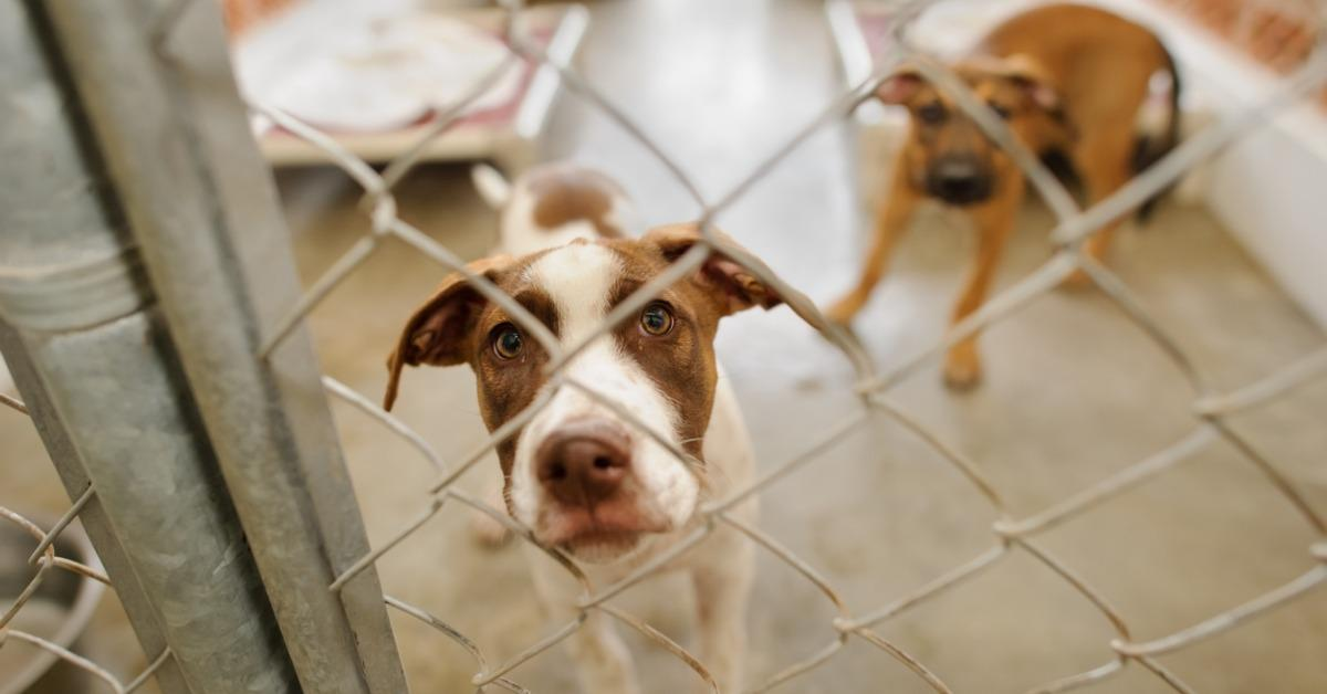 dog-shelter-picture-id856928498-1539716157738-1539716167188.jpg