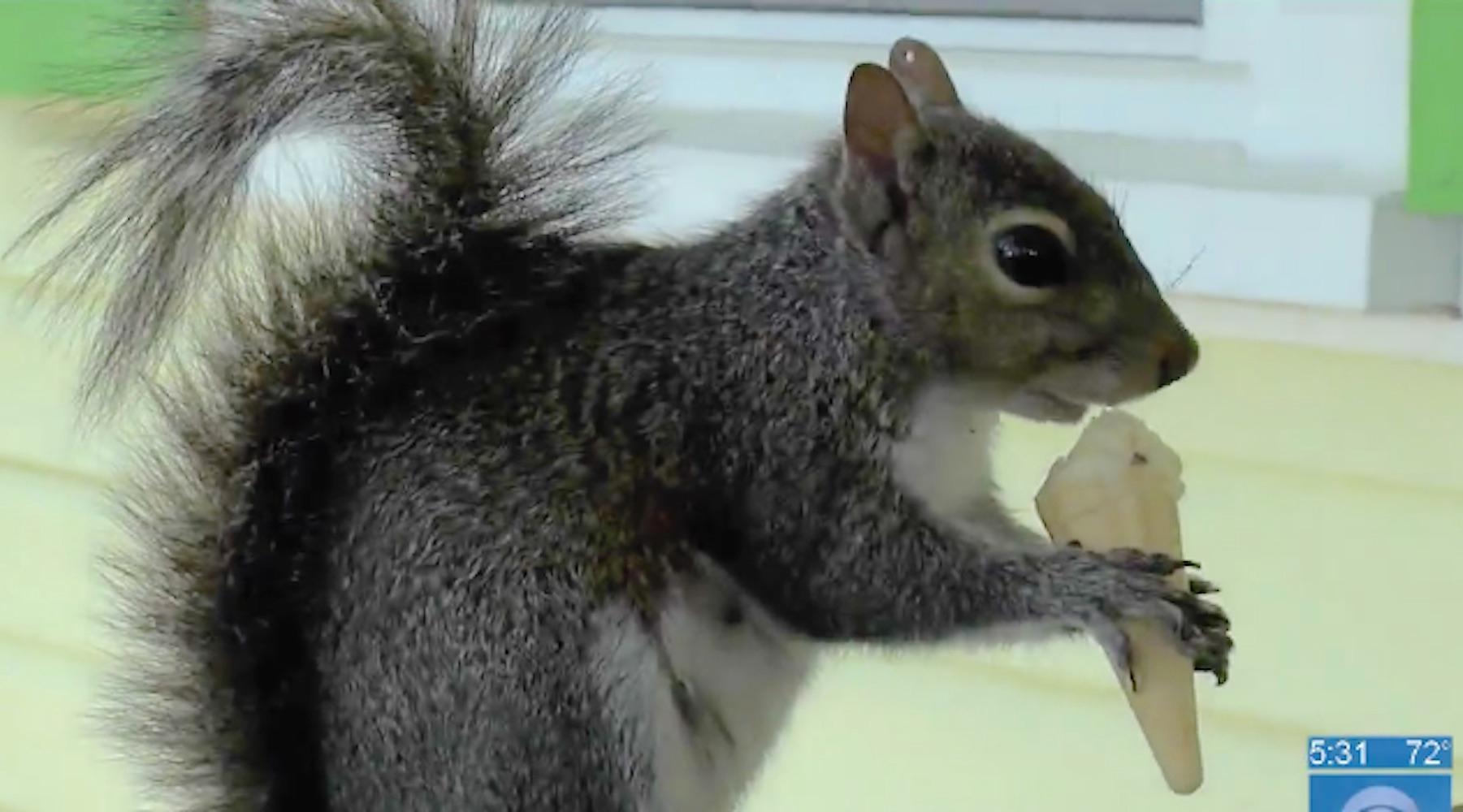 squirrelmain-1492104643856.jpg
