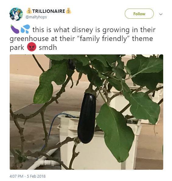epcot-greenhouse-twitter-4-1536035615654-1536035617427.JPG