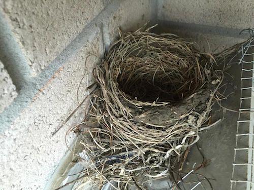 bird4-1532531009731-1532531011190.jpg