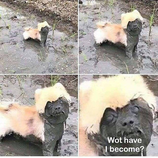 dirtydog-1535139203020-1535139204830.jpg
