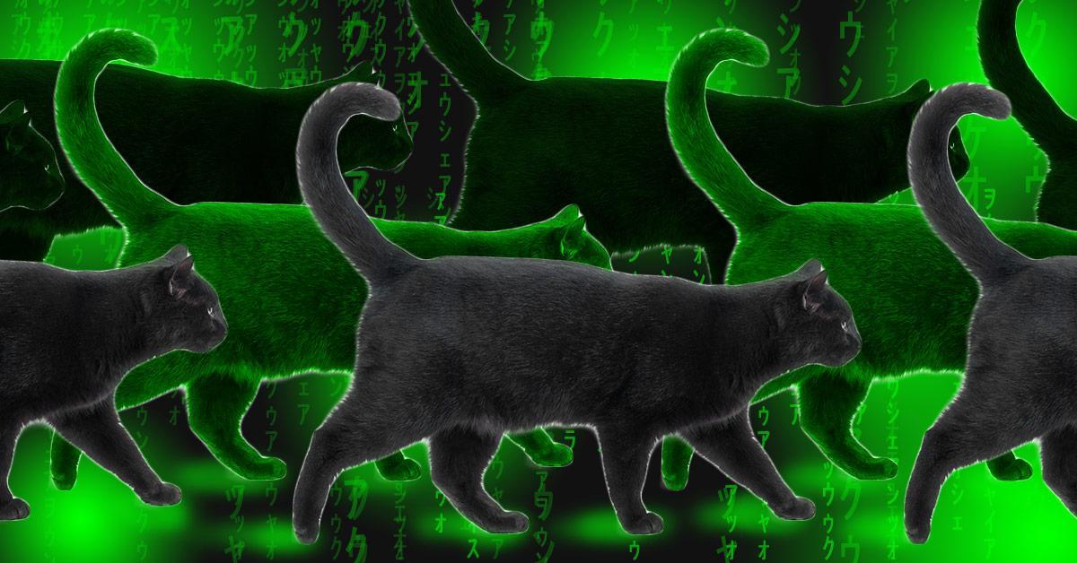 matrix-glitch-1-ALT-1535660817133-1535660819800.jpg