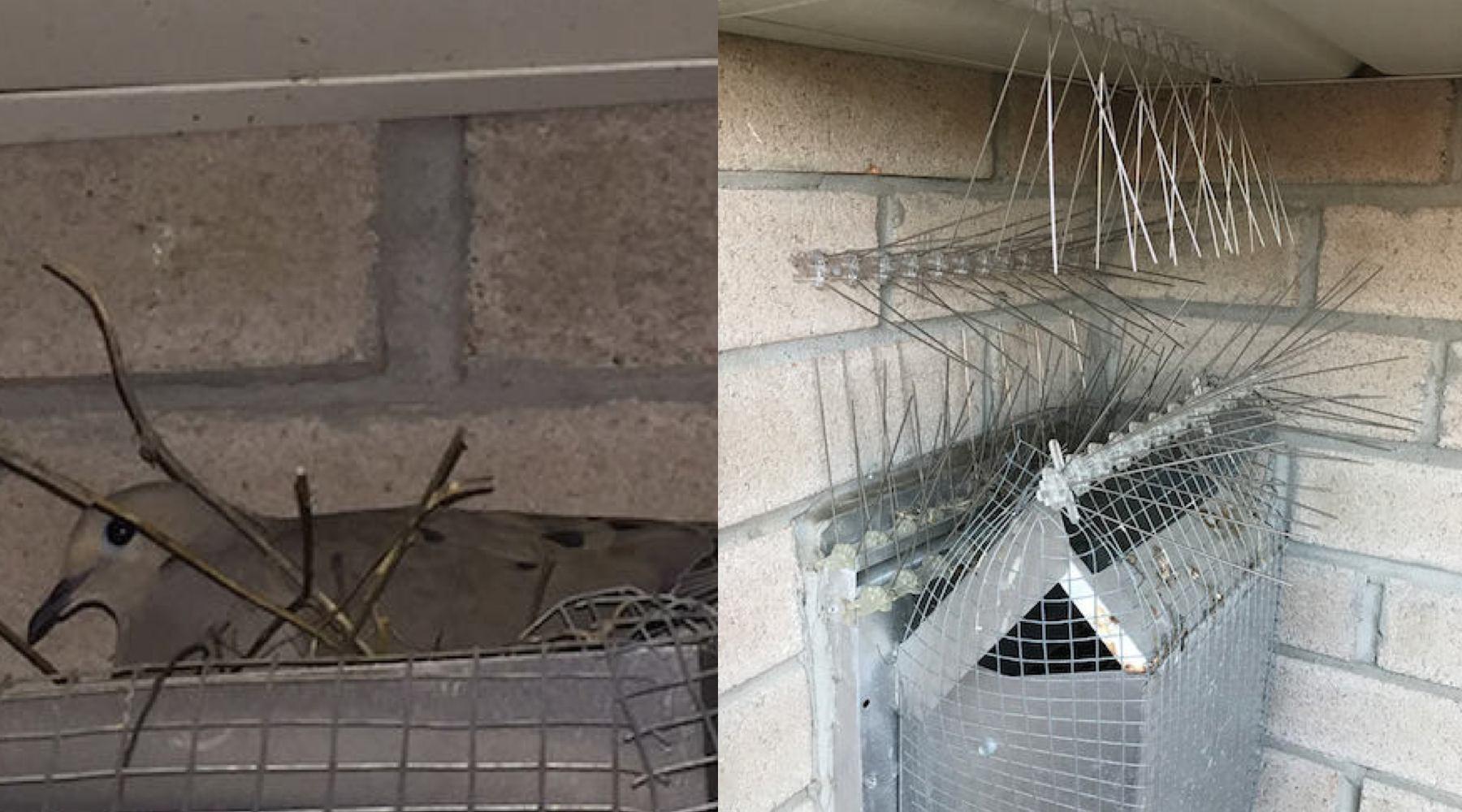 Bird_battle-1532461184381-1532461186449.jpg