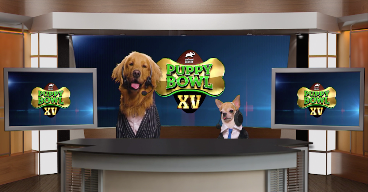 are-puppy-bowl-dogs-up-for-adoption-1548971373964-1548971382511.png