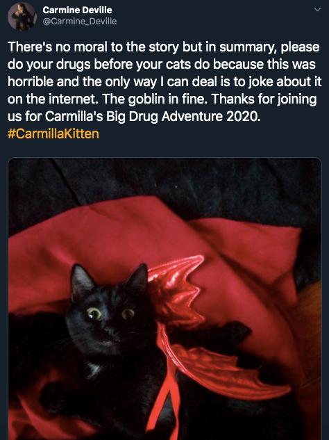 16a-high-cat-1581445605447.jpg