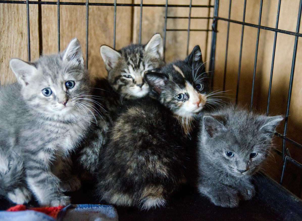 kittens-1539633876615-1539633878860.jpg