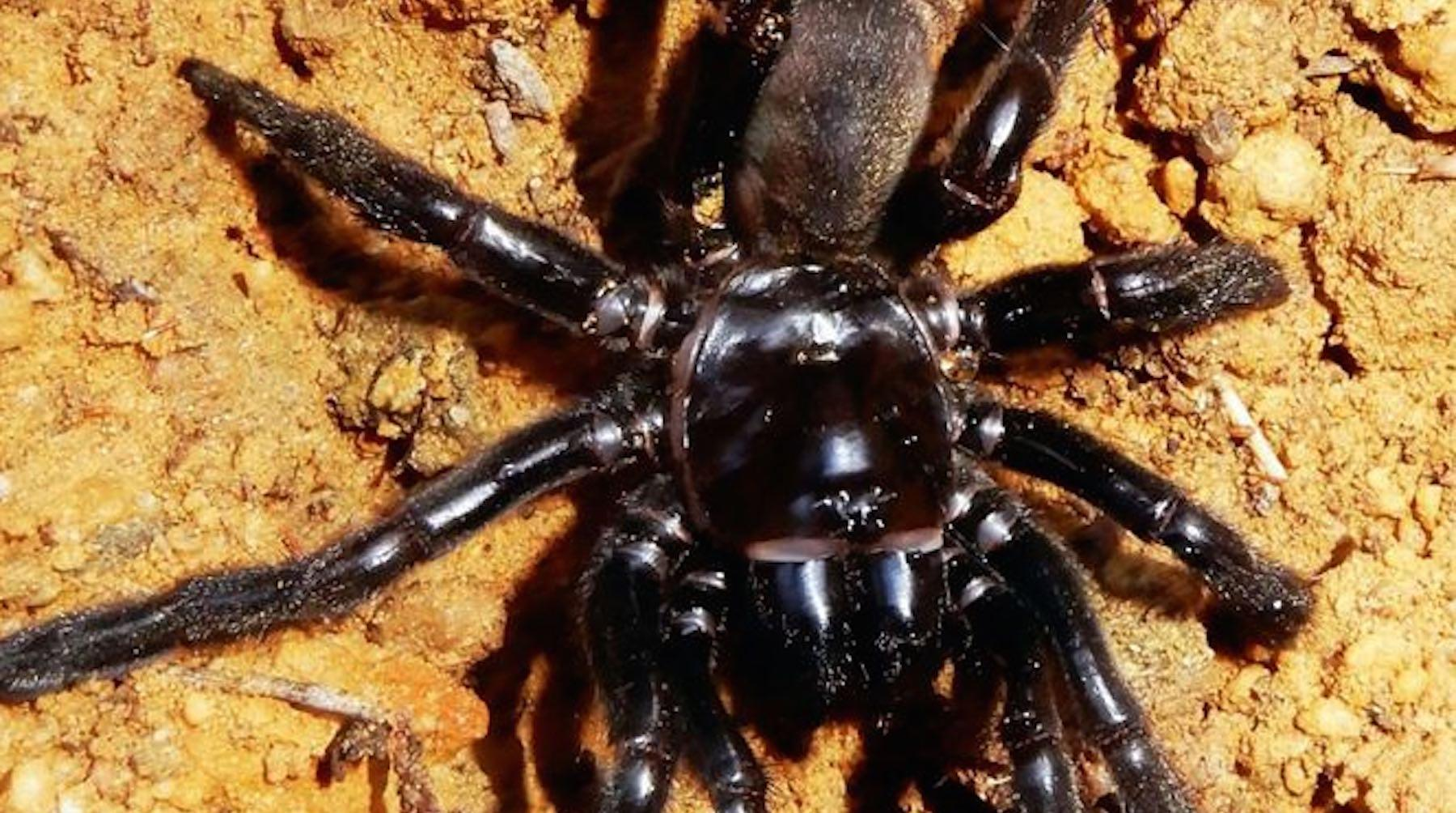 spider-1525114595153.jpg