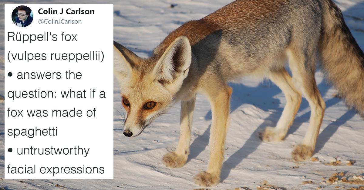 fox-1510755432535.jpg