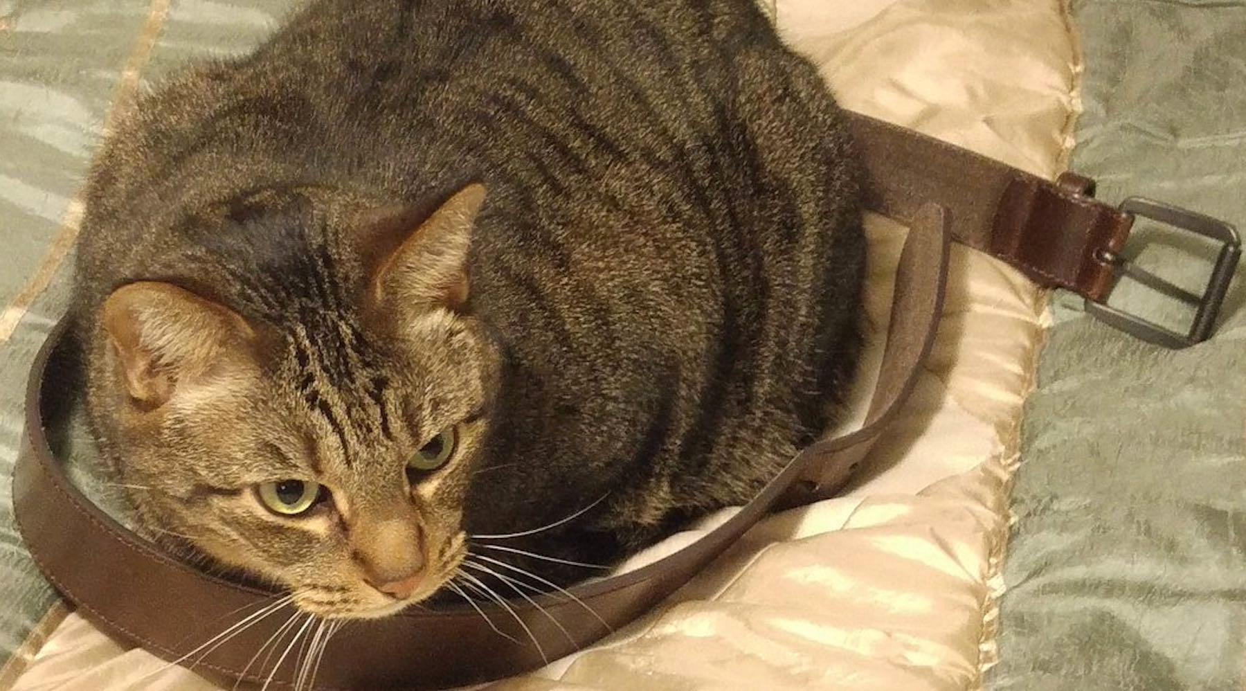 cat-1519150273683.jpg