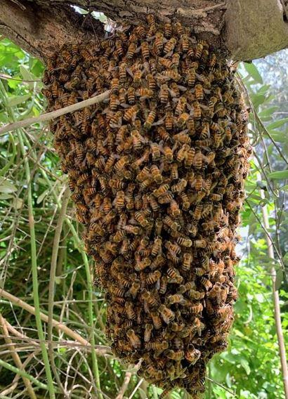 bees-eye-3-1554904683251.jpg