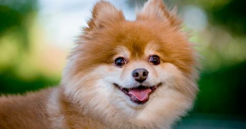 dog-coronavirus-1582944626446.jpg