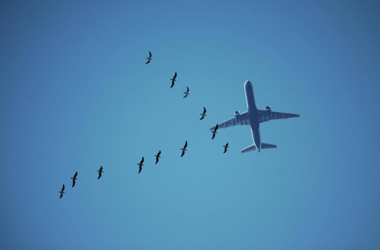 plane11-1535743763222-1535743767930.jpg
