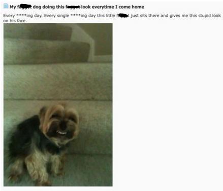 grinningdog-1535139770305-1535139771908.jpg
