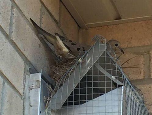 bird5-1532531027867-1532531029442.jpg