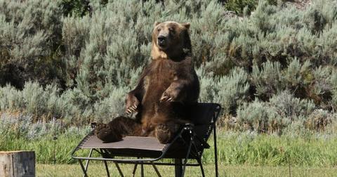 bart-man-vs-bear-1575393644740.jpg