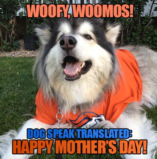 Happy Dog Mom Day Memes To Celebrate The Best Day Of The Year