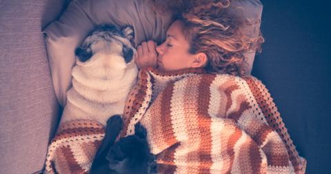 6-kissing-dogs-1563468311282.jpg