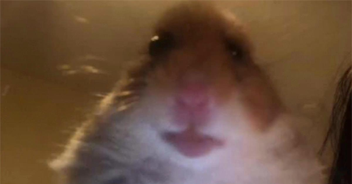 Yep, a Hamster Cult is Currently Battling a Lana Del Rey Cult on <b>TikTok</b> thumbnail