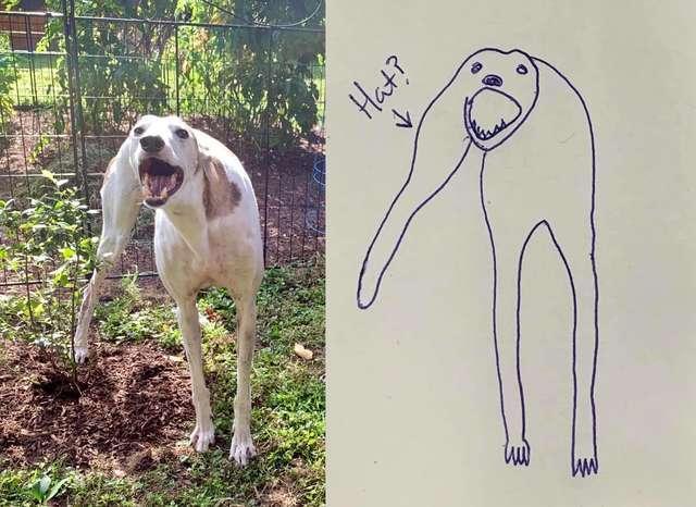 3-flat-dog-doodles-1567790567104.jpg