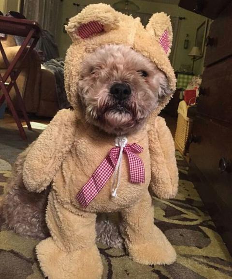 13-dog-costumes-1568997881169.jpg