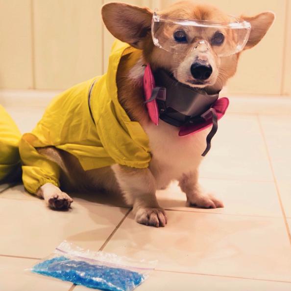 2-dog-costumes-1568997742619.jpg