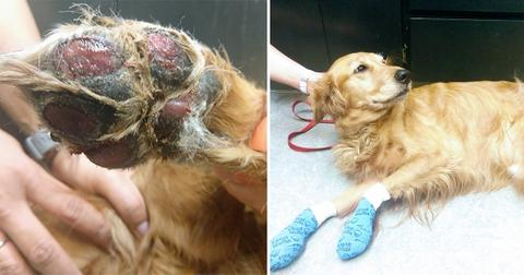 Vet Gives Warning After Dog's Paw Pads Melt Off From Hot Pavement