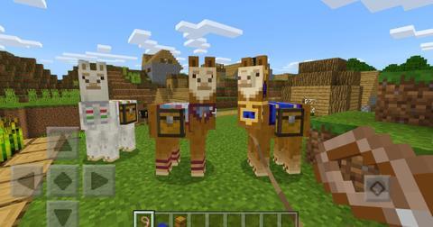 minecraft-llamas-2-1577990343566.jpg