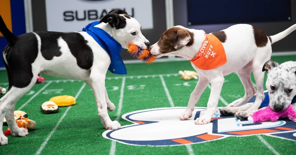 Puppy Bowl 2021