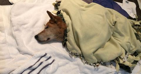 dog-in-blanket-1589654340406.jpg