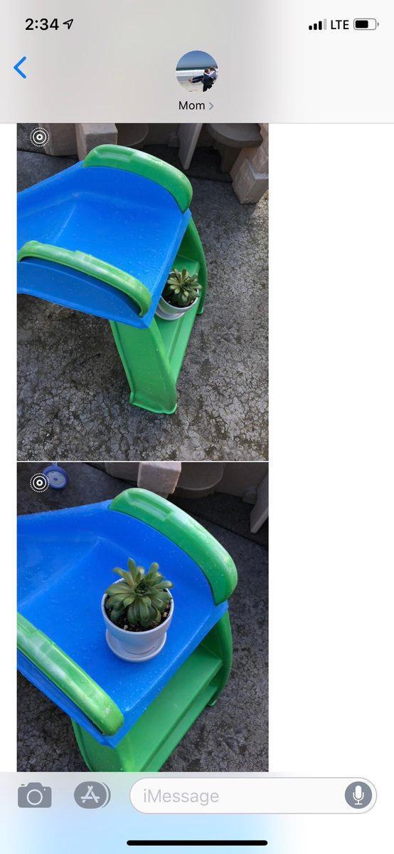plants-grandbabies-3-1553799776491.JPG