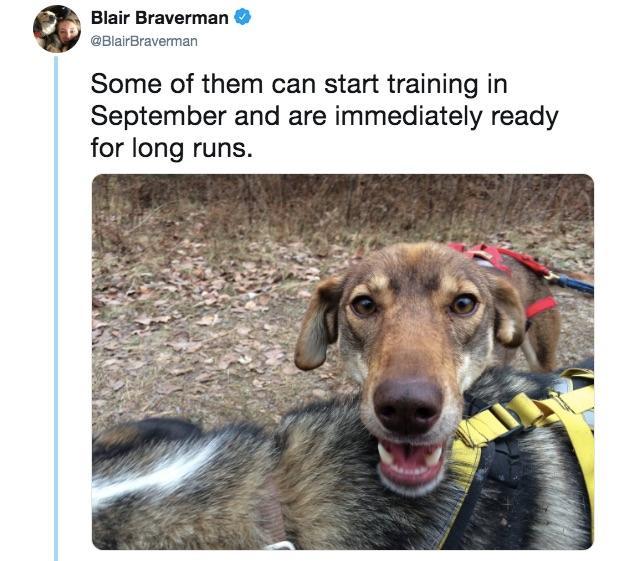 8-sled-dogs-1563217844290.jpg