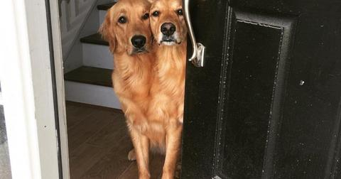 conjoined-dogs-1560263553309.jpg