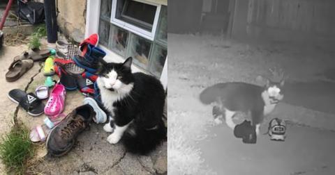 featured-cat-burglar-1597784608647.jpg