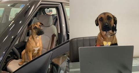 dog-dealership-1597087500754.jpg