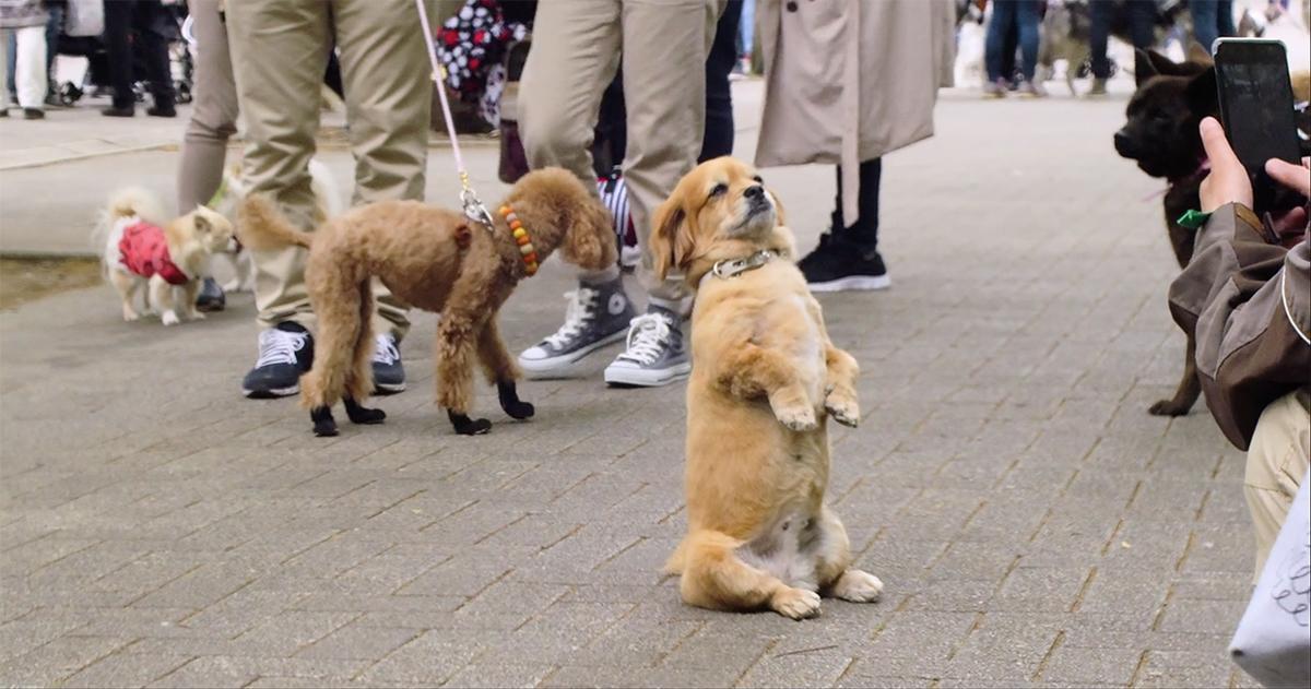 dogs-netflix-documentarycopy-1540912680506-1540912682457.jpg