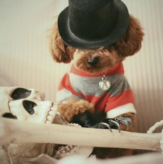 10-dog-costumes-1568997845807.jpg