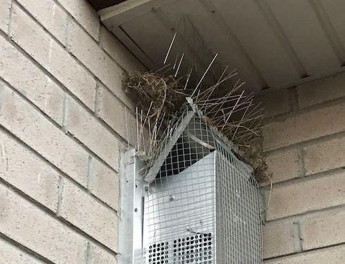 bird10-1532531190973-1532531192516.jpg