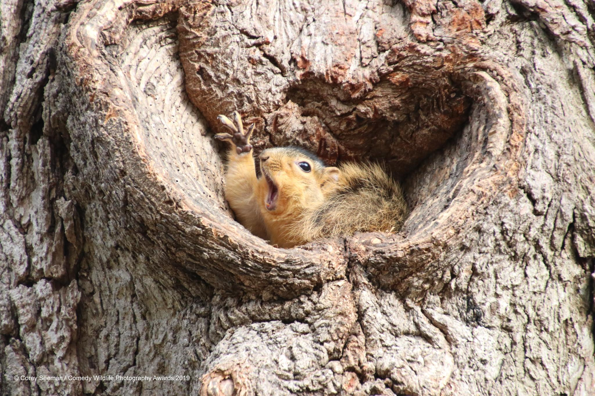 5-corey-seeman_who-would-like-a-peanut-squirrels-at-the-university-of-michigan_00003651-1568311185439.jpg