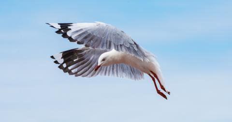 featured-seagull-1563819505220.jpg